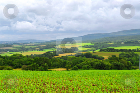 Agricultural landscape stock photo, Scenic view on summer agricultural landscape in Brittany, France by Elena Elisseeva