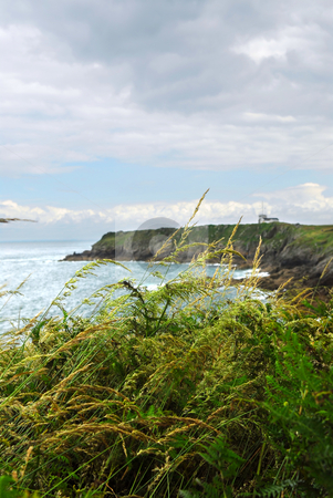 Atlantic coast in Brittany stock photo, Wind blowing tall grass at Atlantic coast of Brittany, France. by Elena Elisseeva