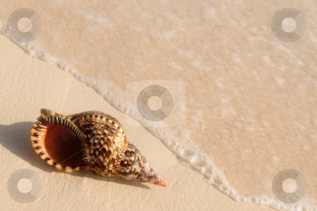 Seashell laying on sand stock photo, Seashell and ocean wave on sandy tropical beach by Elena Elisseeva