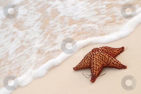 Starfish and ocean wave stock photo, Starfish and ocean wave on sandy tropical beach by Elena Elisseeva