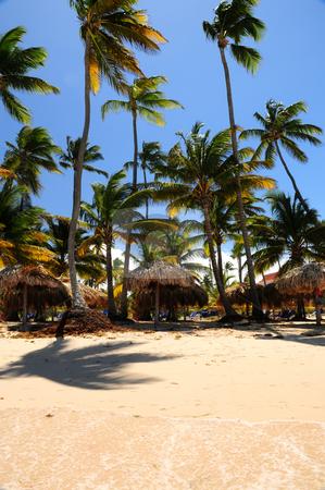 Tropical beach stock photo, Tropical beach with palm trees and umbrellas on Caribbean island by Elena Elisseeva