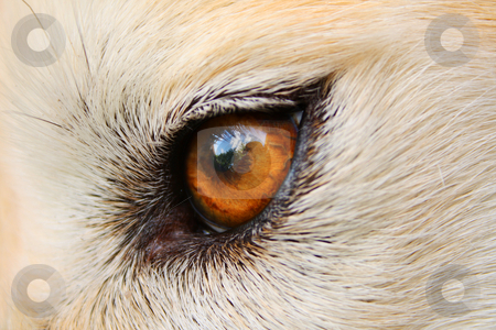 Look stock photo, A close up of a dog's brown eye by Jessica Tooley