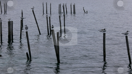 Perches stock photo, Seagulls perching on posts in the ocean on  a depressingly grey, rainy day. by Jessica Tooley