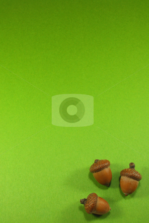 Acorns stock photo, Oak acorns isolated by Jessica Tooley