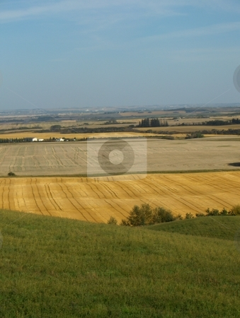 Patchwork Fields stock photo, The view from a hill on the Canadian prairies by Jessica Tooley