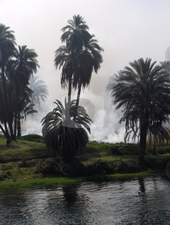 Smoke on the Nile stock photo, Smoke drifting through fields and palm trees on the Nile in Egypt. by Jessica Tooley