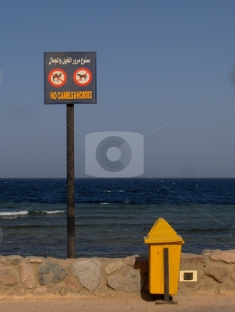 No Camels or Horses sign stock photo, A sign on a beach in Dahab, Egypt. by Jessica Tooley