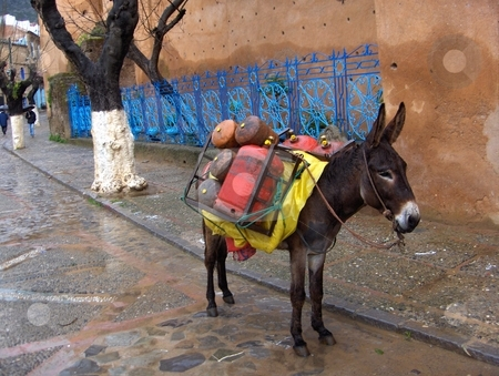 Donkey stock photo, Pack animal with a brightly colored load in Chefchouen, Morocco. by Jessica Tooley