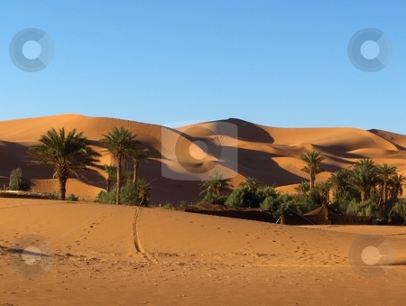 Sahara Oasis stock photo, Oasis in the Sahara, near Merzouga, Morocco. by Jessica Tooley