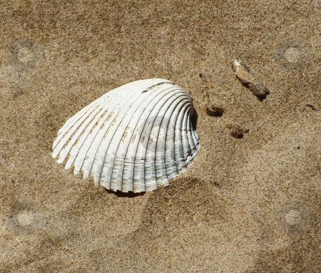 Seashell  stock photo, Seashell buried in sand by Marburg