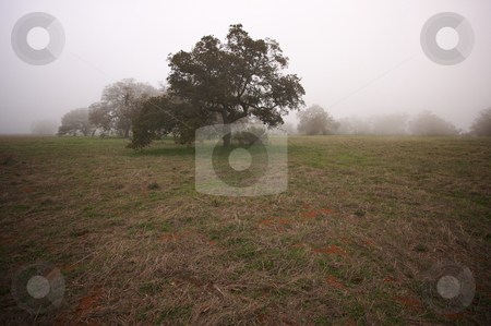 Foggy Countryside and Oak Trees stock photo, Foggy Countryside with Majestic Oak Trees by Andy Dean