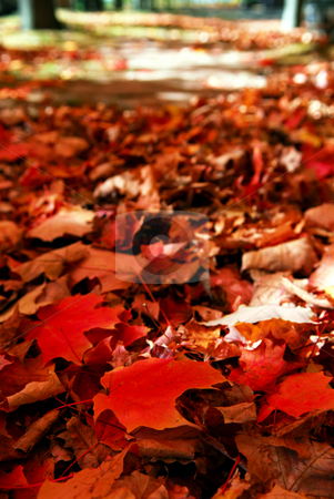 Fallen autumn leaves stock photo, Red maple tree leaves on the forest floor in the fall by Elena Elisseeva