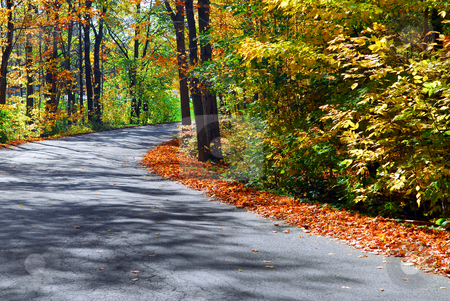 Fall forest road stock photo, Curving road in a colorful fall forest by Elena Elisseeva