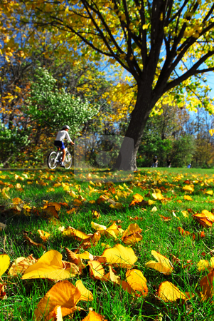 Fall park stock photo, View of biking trail in the fall, golden fallen leaves in the foreground by Elena Elisseeva