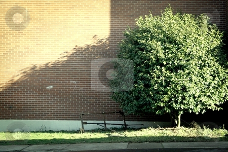 Schoolyard Tree stock photo, A tree casts a long shadow across a brick wall of a school. by Nathan Smith