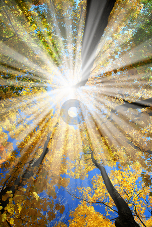 Sunrays in the forest stock photo, Sun rays in a golden autumn forest by Elena Elisseeva