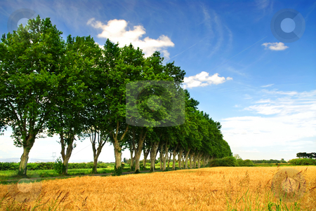 French country road stock photo, Landscape with a country road lined with sycamore trees in southern France by Elena Elisseeva