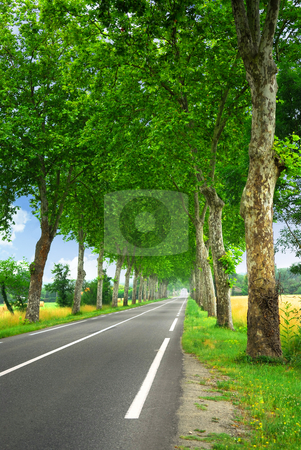 French country road stock photo, Country road lined with sycamore trees in southern France by Elena Elisseeva