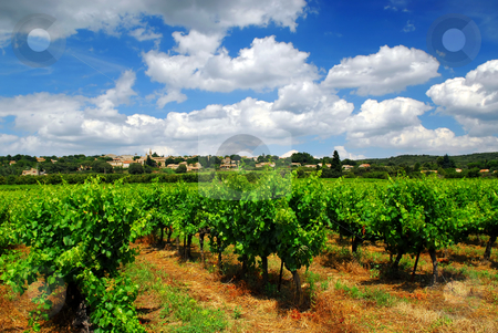 Vineyard in french countryside stock photo, Rows of green vines in a vineyard in rural southern France by Elena Elisseeva