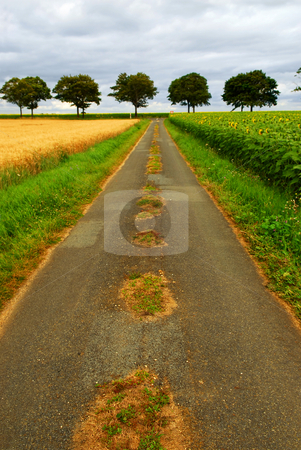 Road in rural France stock photo, Road in rural France with wheat and sunflower fields by Elena Elisseeva