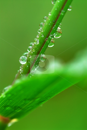 Raindrops on grass stock photo, Big water drops on a green grass, macro by Elena Elisseeva
