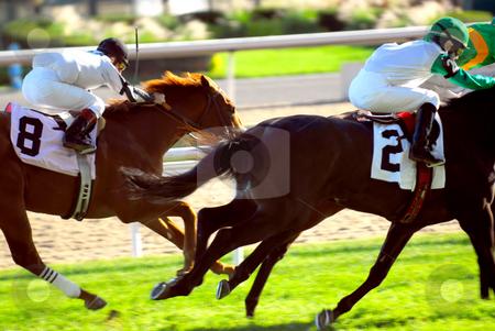 Horses racing stock photo, Jockeys racing thoroughbred horses on a turf racetrack by Elena Elisseeva