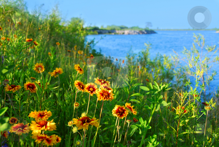 Wild flowers on seashore stock photo, Wild flowers indian blankets blooming on sea shore by Elena Elisseeva