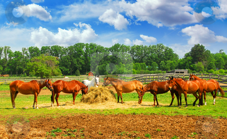 Horses eating in the pasture stock photo, Several horses feeding at the runch on bright summer day by Elena Elisseeva