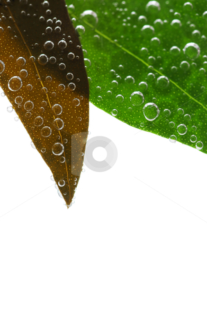 Green leaves in water stock photo, Green and brown leaves of a plant submerged in water with air bubbles by Elena Elisseeva