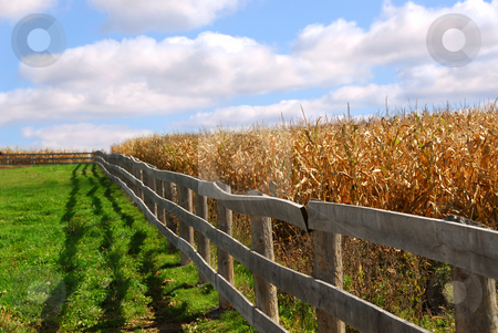 Rural landscape stock photo, Rural landscape with blue cloudy sky and wooden fence by Elena Elisseeva