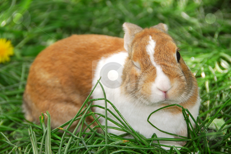 Winking bunny stock photo, Cute easter bunny sitting on green grass and winking:) by Elena Elisseeva