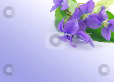 Violets frame stock photo, Spring border with white copy space and violet bouquet by Elena Elisseeva