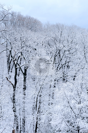Winter forest stock photo, Winter forest covered with snow, natural background by Elena Elisseeva