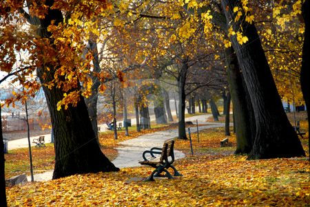 Autumn park stock photo, Park with old trees and recreation trail in the fall by Elena Elisseeva