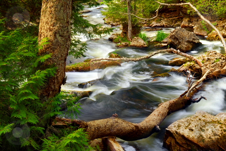River rapids stock photo, Rocky river rapids in wilderness in Ontario, Canada by Elena Elisseeva
