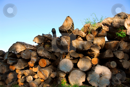 Wood logs stock photo, Background of stacked logs lit by evening sun by Elena Elisseeva