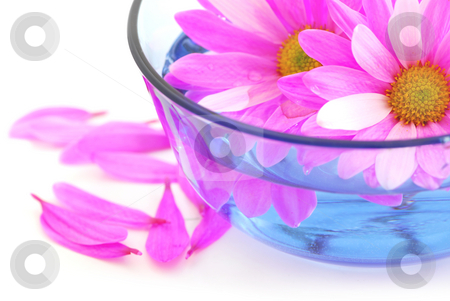 Pink flowers stock photo, Closeup of pink flower blossoms floating in water by Elena Elisseeva