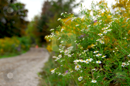 Rural road stock photo, Rural dirt road in Ontario, Canada, focus on flowers by Elena Elisseeva