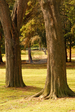 Park stock photo, Park view with two big old trees in a foreground by Elena Elisseeva