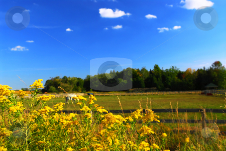 Rural landscape stock photo, Rural summer landscape with blooming ragweed in foreground by Elena Elisseeva