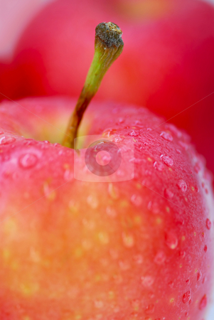 Red apples macro stock photo, Macro of red apples with water droplets by Elena Elisseeva