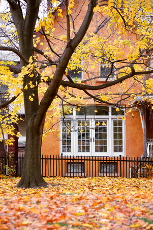 House autumn stock photo, Residential house and tree in the fall by Elena Elisseeva