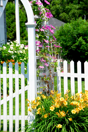 Garden stock photo, White picket fence and pink clematis at country house by Elena Elisseeva