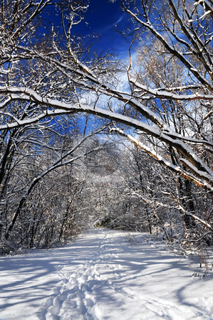 Path in winter forest stock photo, Recreational path in winter forest after a snowfall by Elena Elisseeva