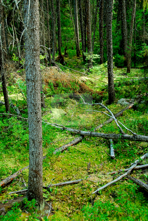Dark forest stock photo, Wilderness dark green forest by Elena Elisseeva