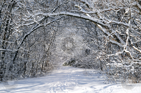 Path in winter forest stock photo, Path in winter forest after a snowfall by Elena Elisseeva
