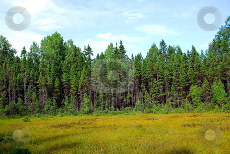 Forest and meadow stock photo, Forest and meadow in wilderness by Elena Elisseeva