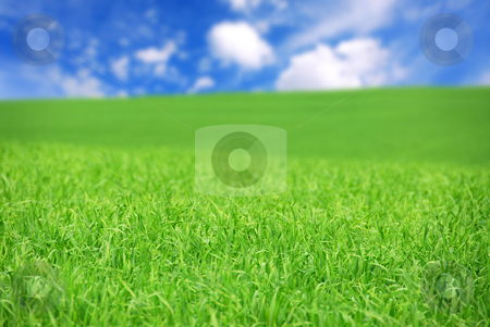 Green field stock photo, Agricultural landscape - green field of young grain grass with bright blue sky by Elena Elisseeva