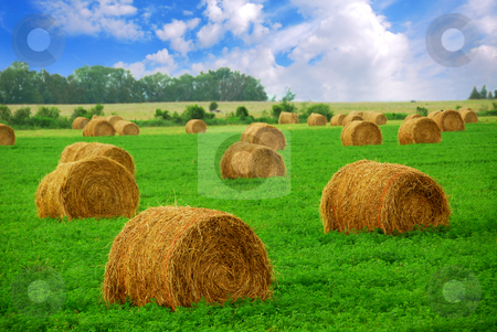 Hay bales stock photo, Agricultural landscape of hay bales in a field by Elena Elisseeva