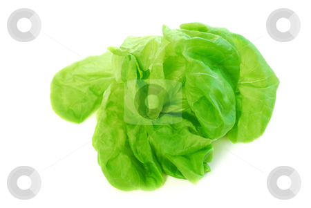 Boston lettuce stock photo, Head of green fresh boston lettuce isolated on white background by Elena Elisseeva
